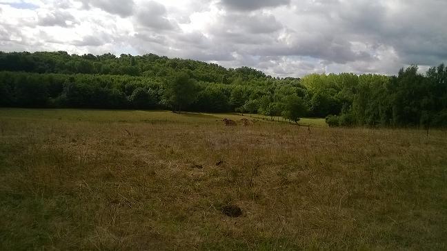 Terrain agricole 4 hectares sur axe bordeaux libourne for Container sur terrain agricole